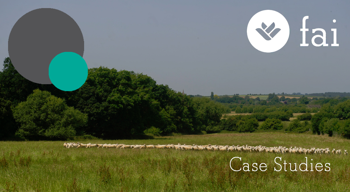 FAI Sheep - Case Studies